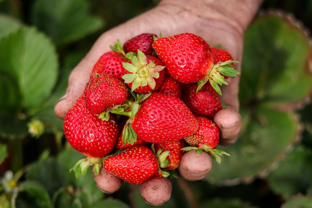 The Big Strawberry